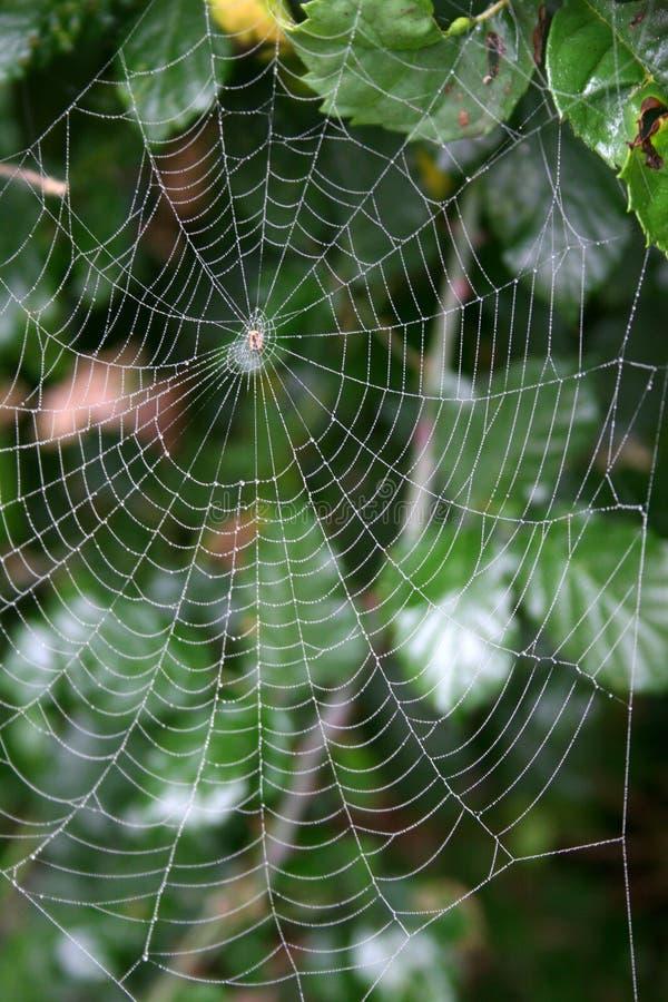 toile d'araignée de rosée image stock