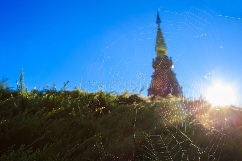 Toile d'araignée et lumière photo stock