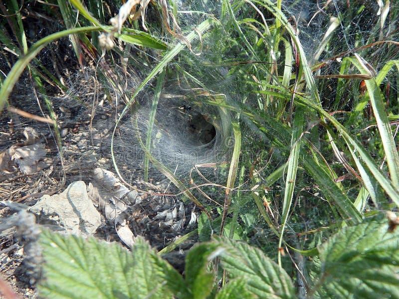Toile d'araignée, filet d'araignée image libre de droits