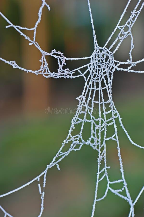 Toile d'araignée gelée photos stock