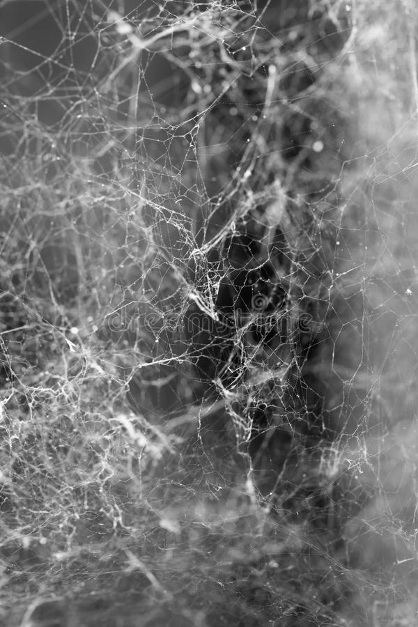 Toile d'araignée d'horreur de triangle ou toile d'araignée d'isolement sur le backgroun noir photo libre de droits
