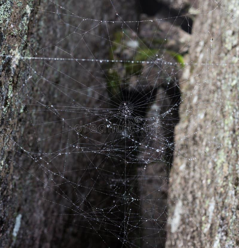 Toile d'araignée d'horreur de triangle ou toile d'araignée d'isolement sur le fond noir, photo horizontale photo libre de droits