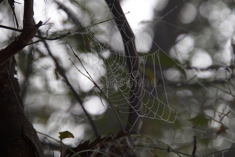Toile d'araignée parfaite Sultanpur images libres de droits