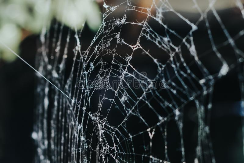 Toile d'araignée pendant le matin photos stock
