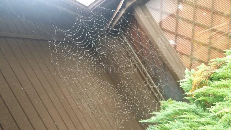 Toile d'araignée sous la pluie images libres de droits