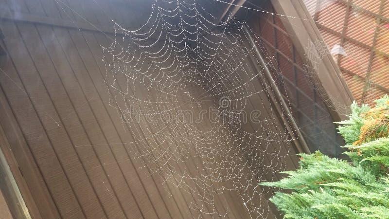 Toile d'araignée sous la pluie photo stock