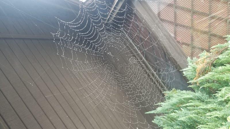 Toile d'araignée sous la pluie image stock
