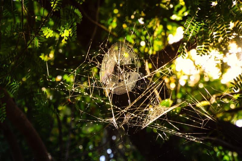 Toile d'araignée sur l'arbre le soir à la campagne image libre de droits