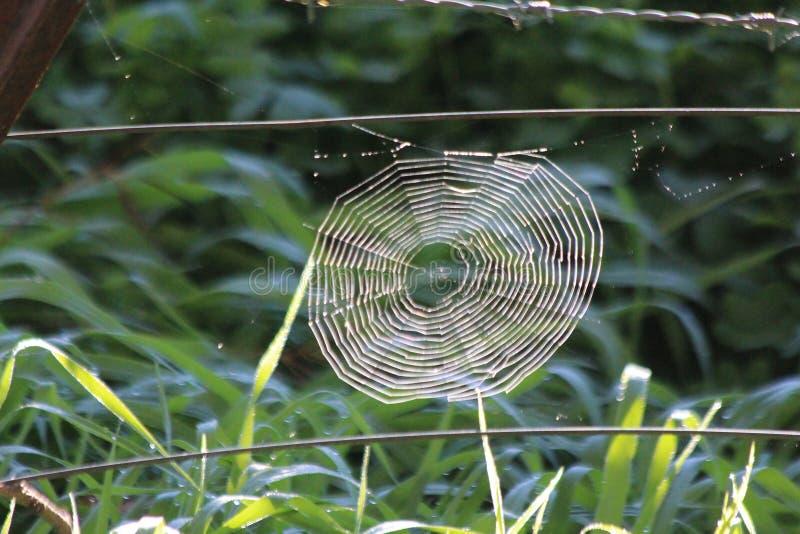 Toile d'araignée sur le grillage photos libres de droits