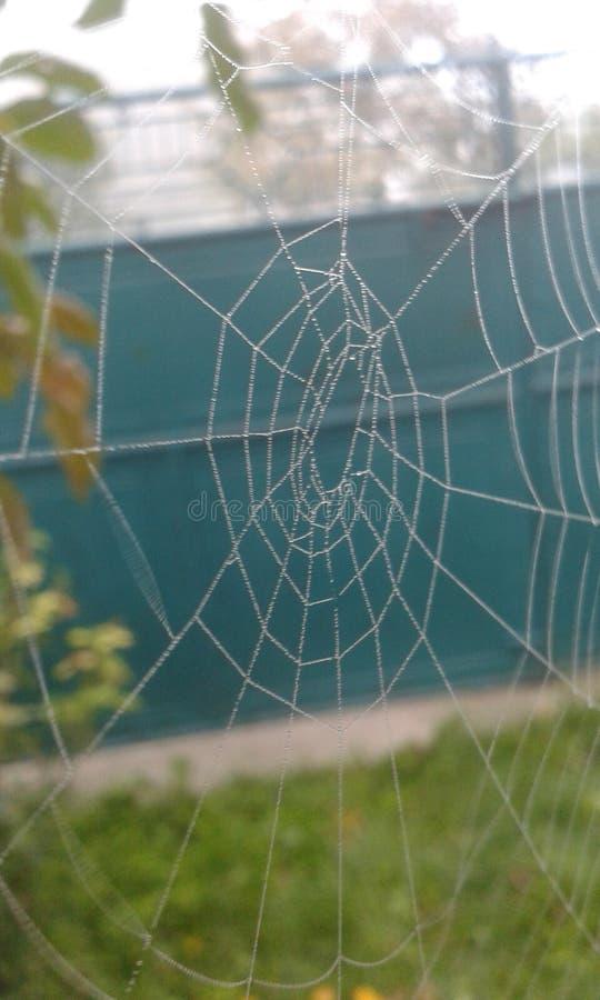 Toile d'araignées photos libres de droits