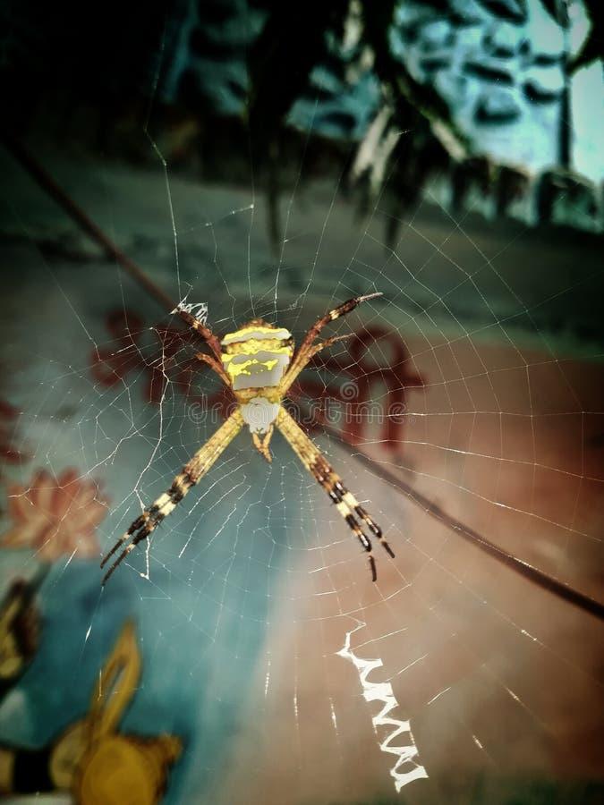 Toile d'araign?e photos libres de droits