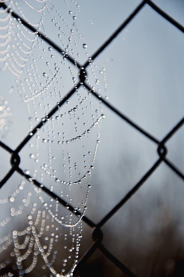 Toile d'araign?e de Frost dans un matin froid Toile d'araign?e sur un vieux grillage Toile d'araign?e, toile d'araign?e avec la b photo stock