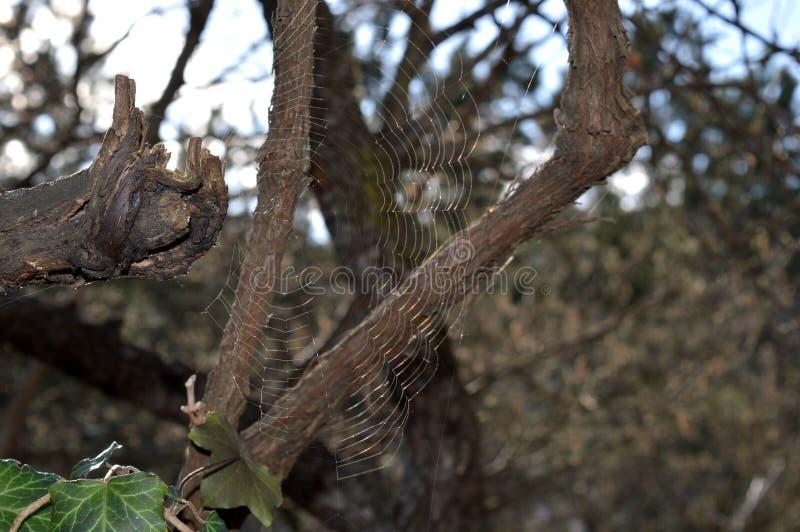 Toile d'araign?e sur l'arbre image stock