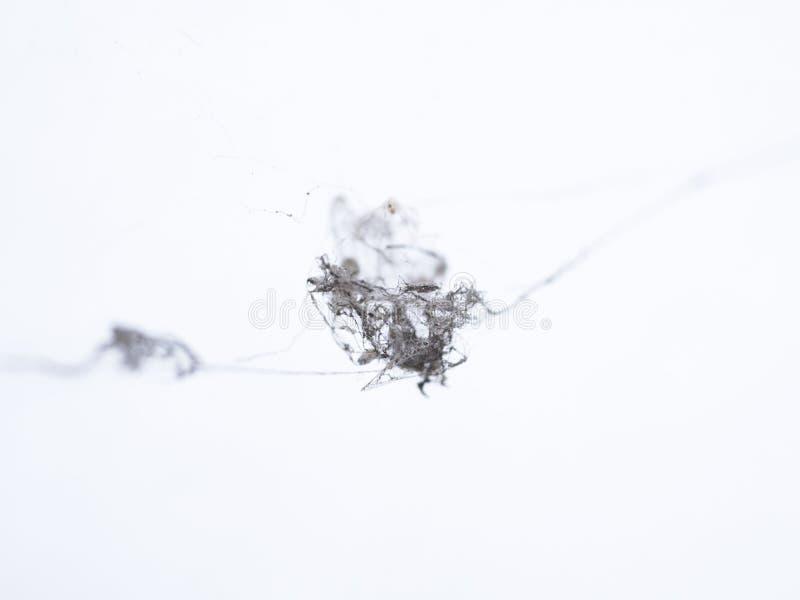Toile d'araign?e sur le fond blanc image libre de droits