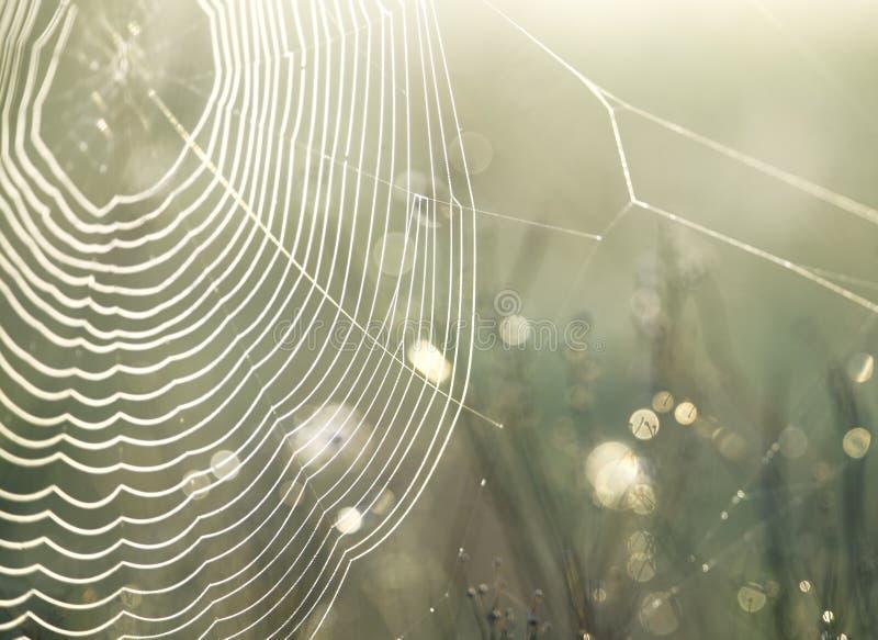 Toile d'araignee avec des perle-baisses images stock
