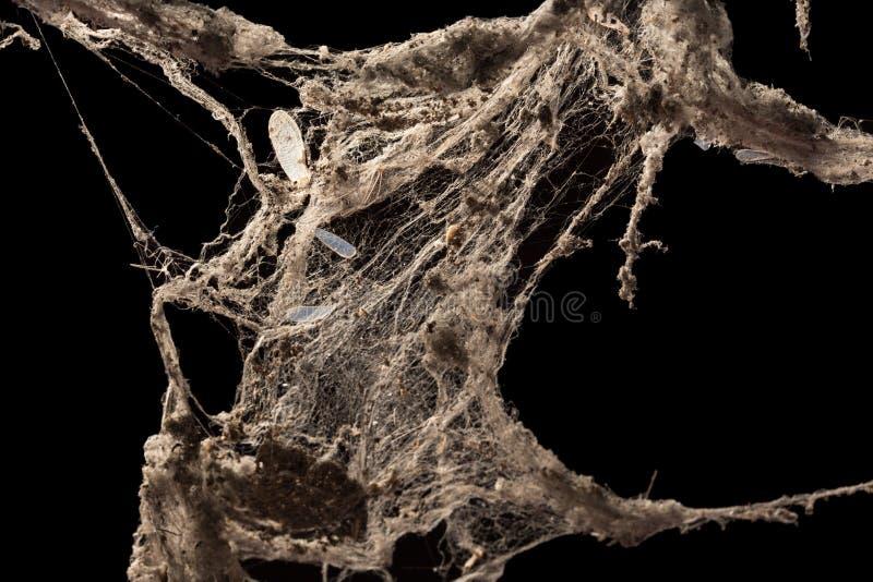 Toile de toile d'araignée ou d'araignée d'isolement sur le fond noir images stock