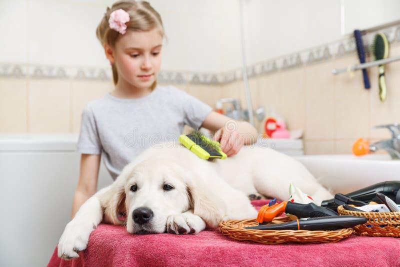 Toilettage de fille de son chien à la maison photos libres de droits