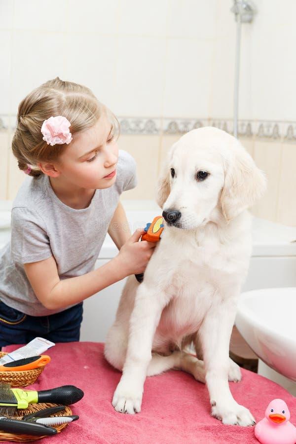 Toilettage de fille de son chien à la maison photos stock