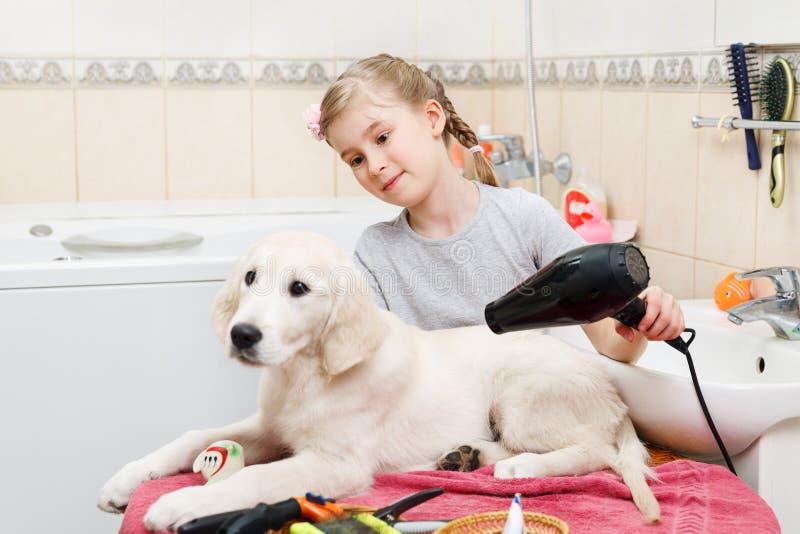 Toilettage de fille de son chien de s à la maison image stock