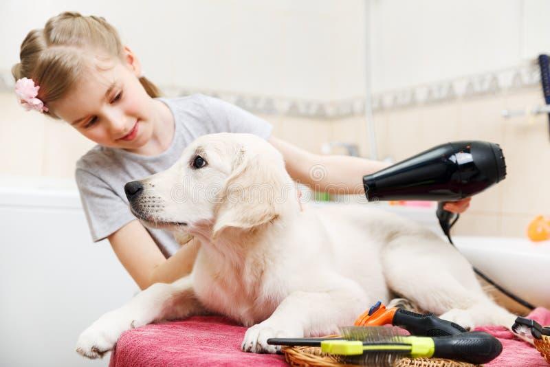 Toilettage de fille de son chien de s à la maison images libres de droits