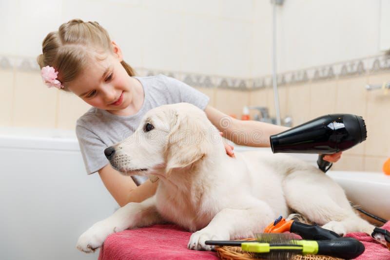 Toilettage de fille de son chien de s à la maison image libre de droits