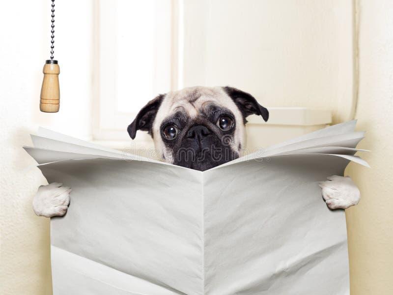 Toilettentraining des Haustieres stockfoto