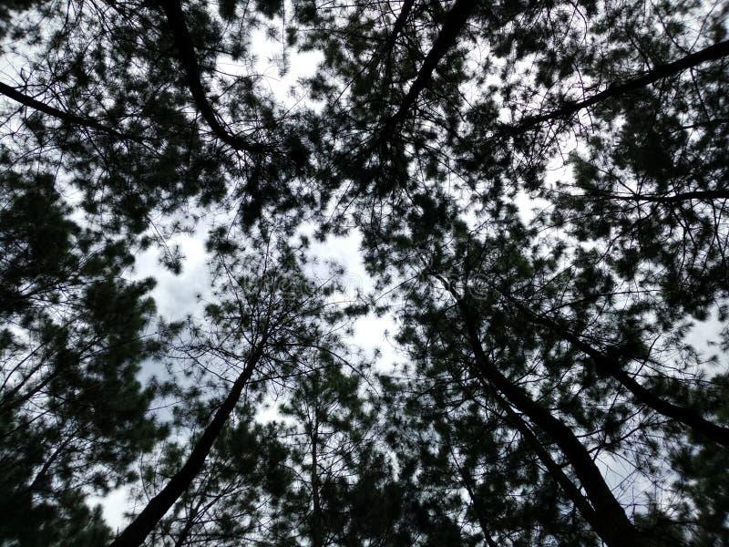Toit de la forêt images libres de droits