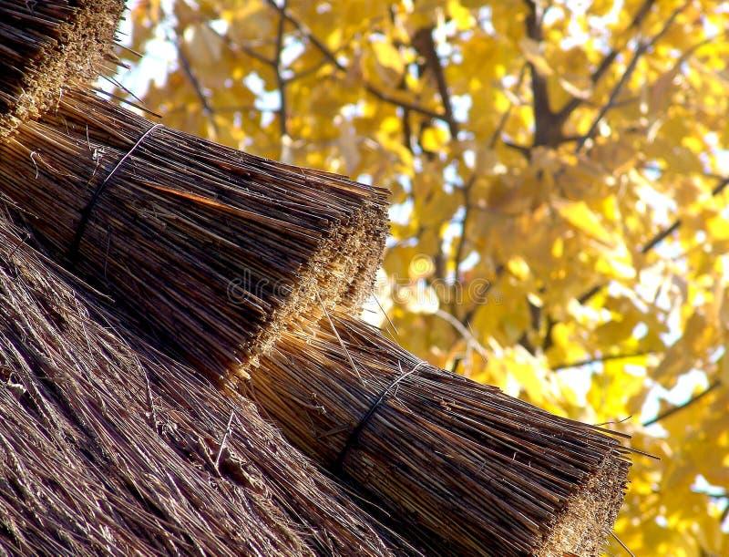 Toit de paille pendant l'automne image libre de droits
