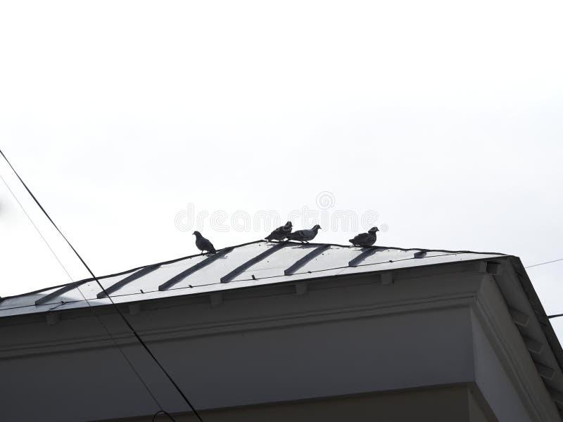 Toit noir et blanc diagonal rempli de fond de colombes images stock