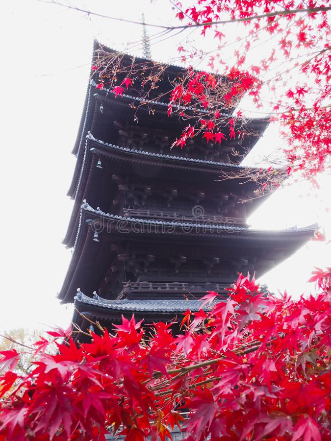 Toji wooden pagoda isolated white sky background,frame with red maple leaves branch tree in autumn season in Kyoto Japan in royalty free stock images