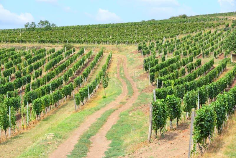 Région de vin de Tokaj image libre de droits