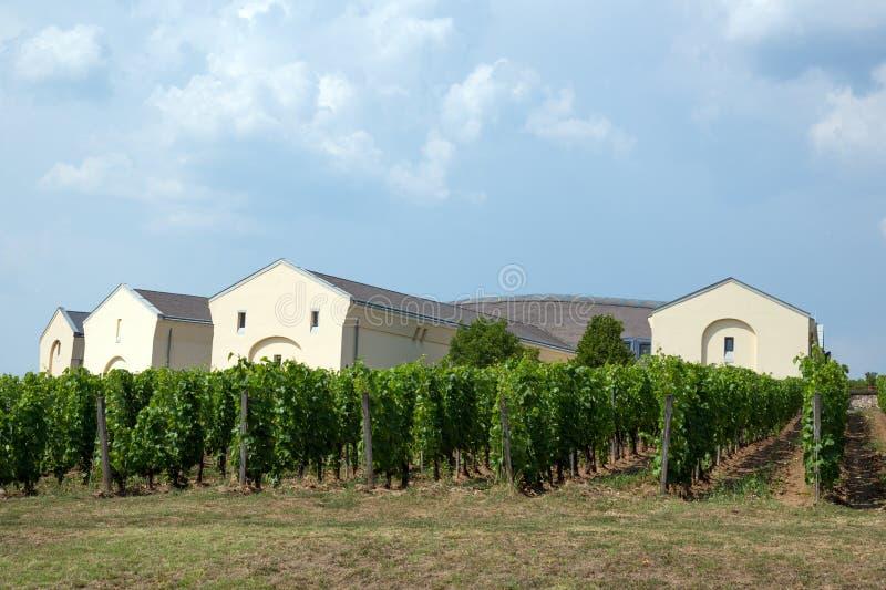 Tokaj vineyard stock photography