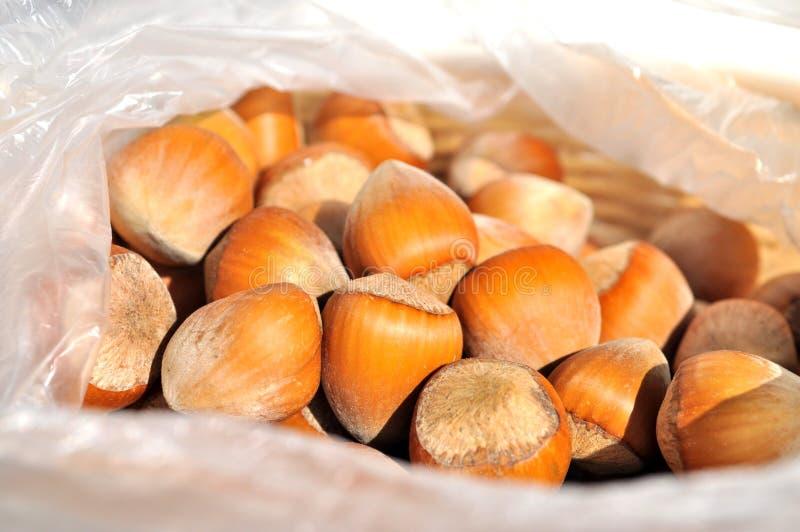 Tokiga hasselnötter stänger sig upp royaltyfri foto