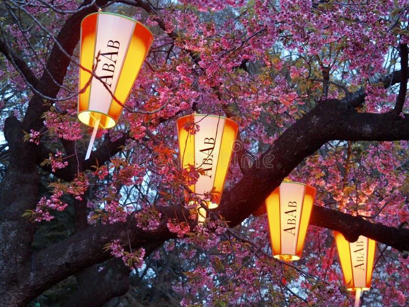 Tokio Cherry Blossoms y linternas imagen de archivo