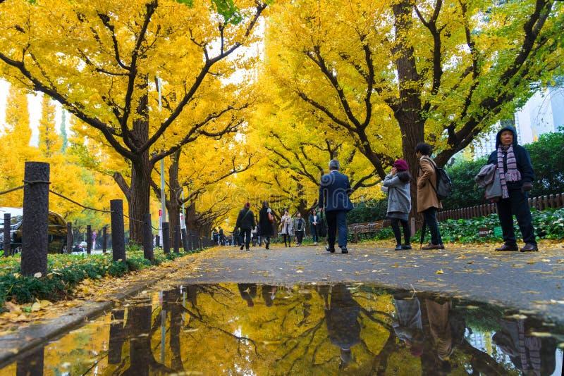 TOKIO, JAPÓN - 19 DE NOVIEMBRE DE 2016 Icho Namiki/avenida del Ginkgo, Mei foto de archivo libre de regalías