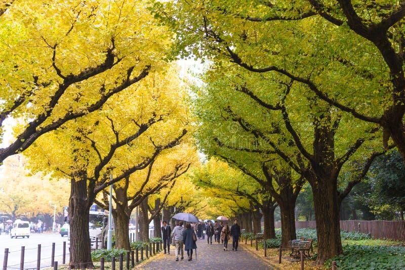 TOKIO, JAPÓN - 19 DE NOVIEMBRE DE 2016 Icho Namiki/avenida del Ginkgo, Mei imagen de archivo