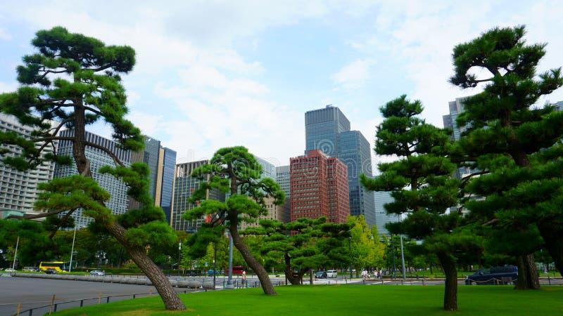 Tokio / Japón - 17 de setiembre de 2018: Pinos y rascacielos Altos edificios en Chiyoda Chiyoda-ku es un pabellón especial ubicad fotografía de archivo