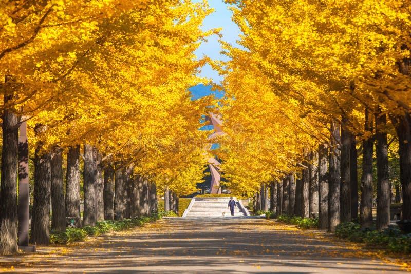 Tokio, Japonia jesień park w Japonia zdjęcia stock