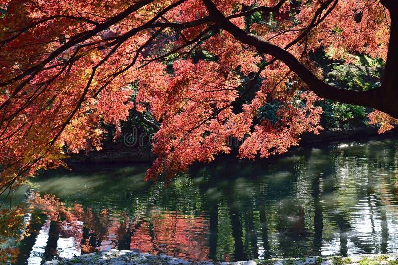 Tokio jesień przy swój szczytowymi kolorami zdjęcia royalty free