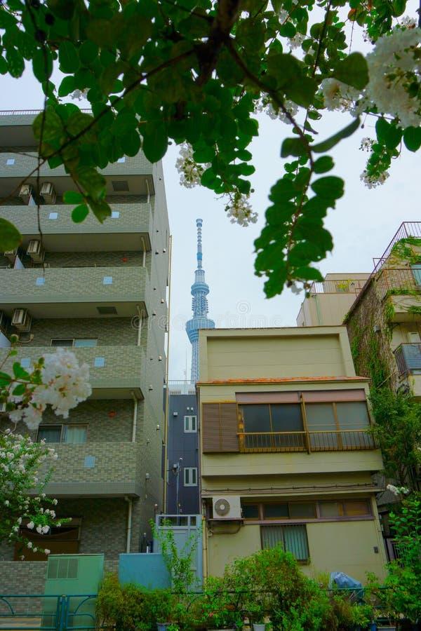 Tokio: Miasto kontrastujący piękno Nieba drzewo, mieszkanie fotografia stock