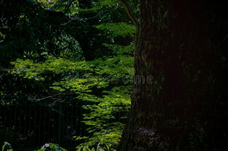 Tokio, podróż, lato, spokój, Japoński styl, park zdjęcia stock