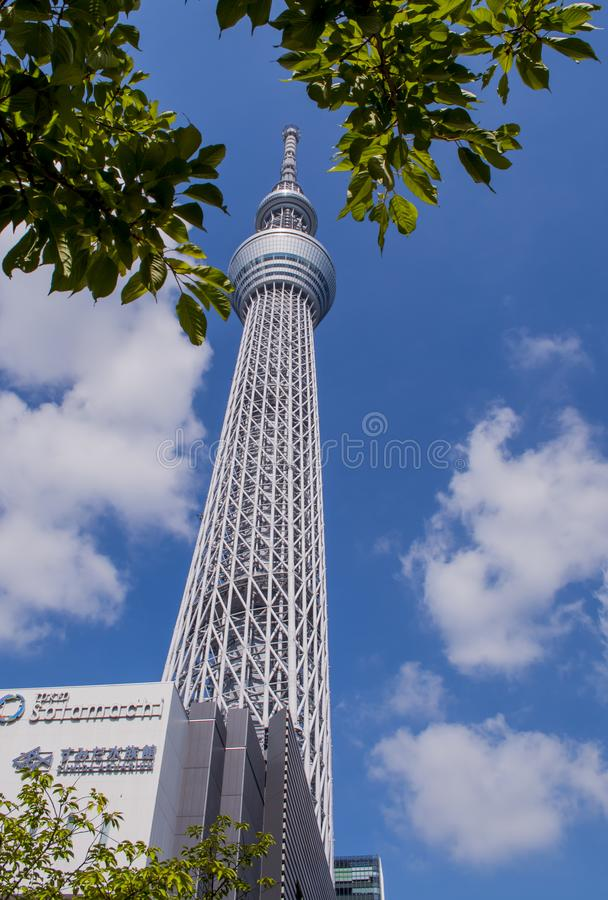 Tokio Skytree widok od Sumida rzeki obraz royalty free