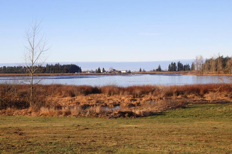 Toksyczny Północnoamerykański Judson jezioro zdjęcie royalty free
