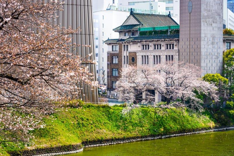 Tokyo byggnader i vår arkivbilder