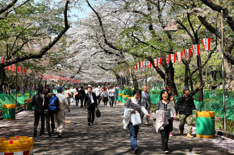 Tokyo - cherry blossom royalty free stock photography