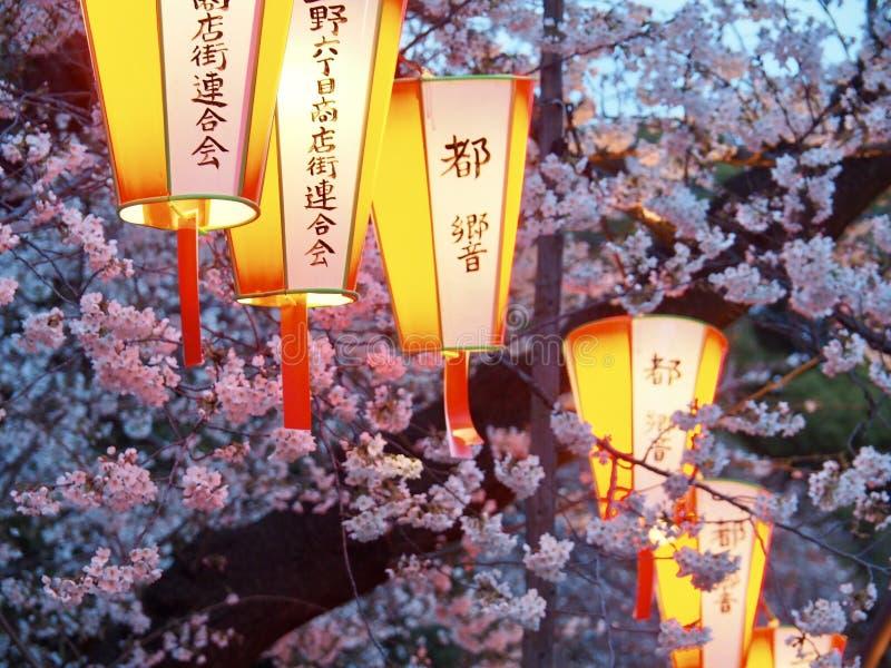 Tokyo Cherry Blossoms en Lantaarns stock afbeeldingen
