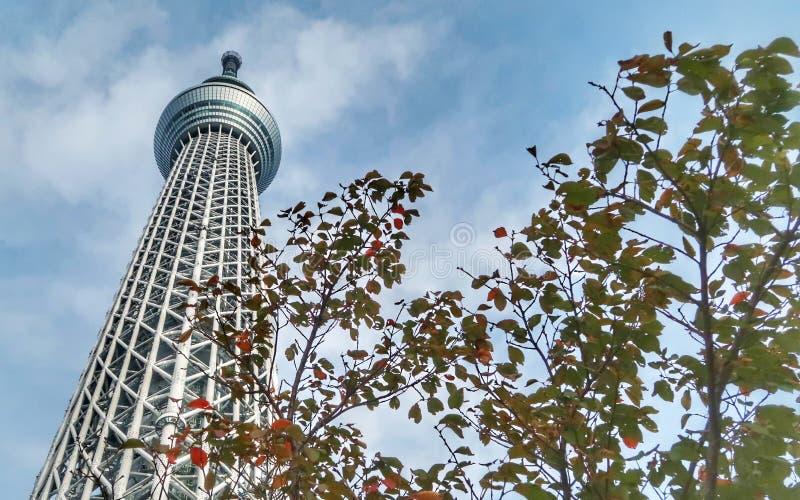 Tokyo-Himmel-Baum-Turm lizenzfreies stockfoto