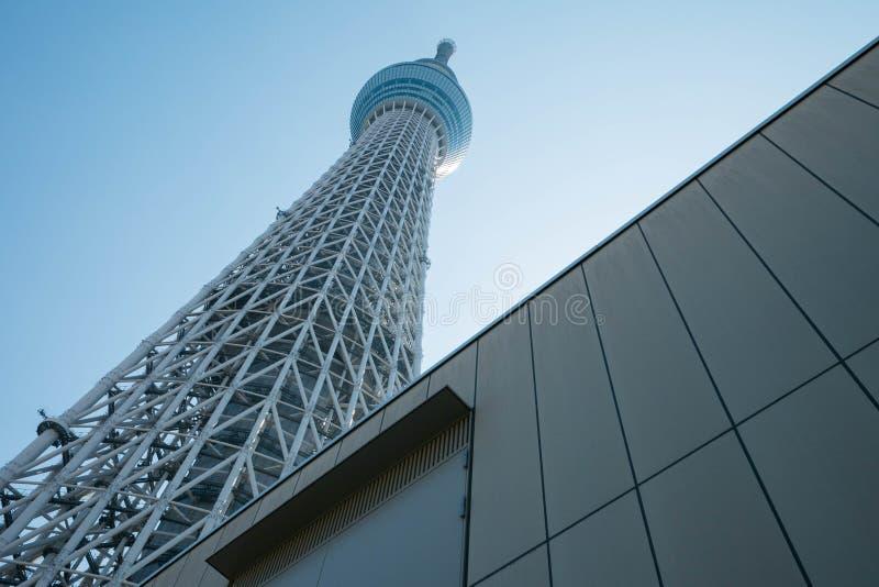 Tokyo-Himmel-Baum-Turm lizenzfreie stockfotos