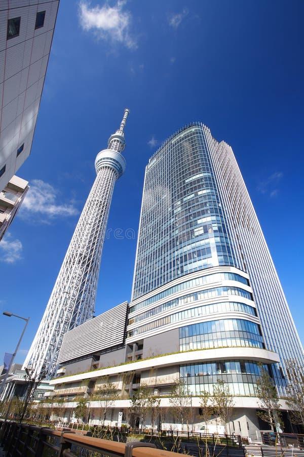 Tokyo-Himmelbaum stockfoto