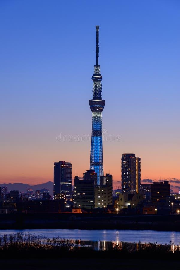Tokyo himmelträd på skymning arkivbild
